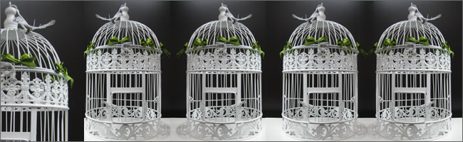 Wedding birdcages for hire, Auckland